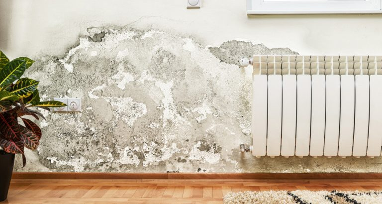 mold growth on damp wall